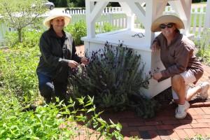 Juanita and Carolyn with lavender